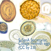 SuSanA Secretariat, Collage Helmith eggs (CC by 2.0)